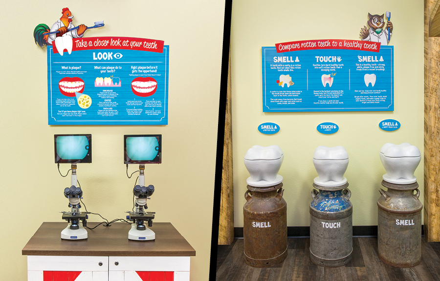 Custom interactive sculpted teeth for teeth education display
