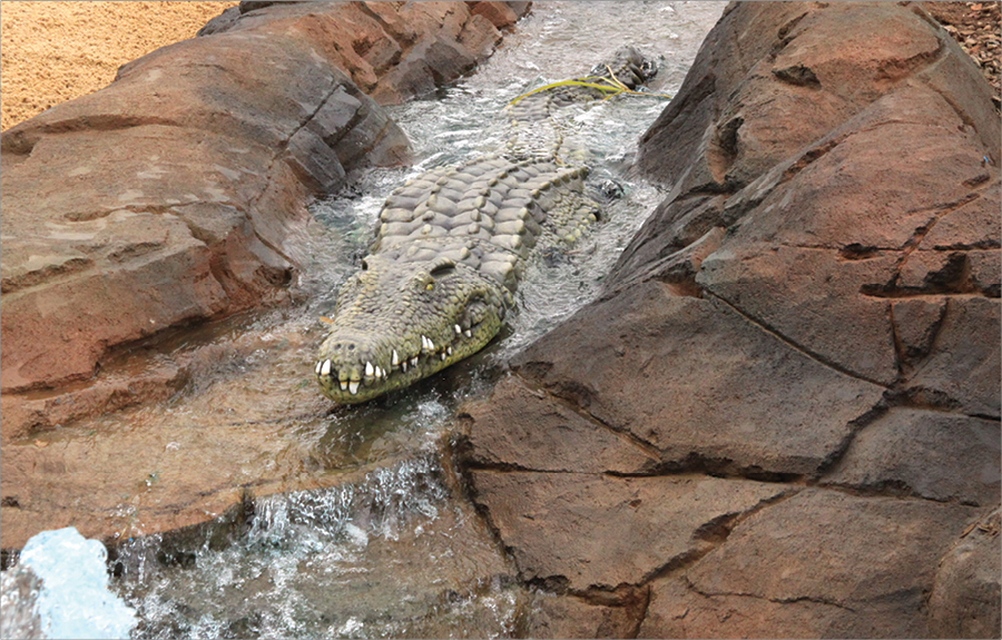 Realistically sculpted crocodile laying in stream in a outdoor zoo exhibit